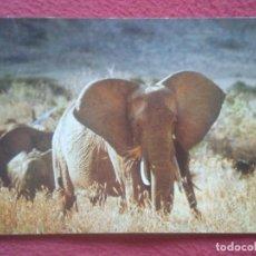 Postales: POSTAL ELEFANTE ELEPHANT ELEFANT ELÉPHANTS ELEFANTEN ELEPHANTS ELEFANTI ELEFANTES, IMPRESA EN SUIZA. Lote 195162992