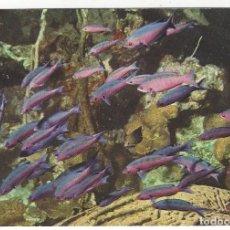 Postales: PECES TROPICALES EN EL MAR CARIBE.. Lote 195383917