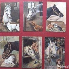 Postales: LOTE DE 31 POSTALES DE CABALLOS-PRINCIPIOS DE SIGLO-VER FOTOS-SIN CIRCULAR. Lote 195482076
