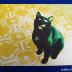 Postales: POSTAL DE ANIMALES. GATO NEGRO. Lote 195525300