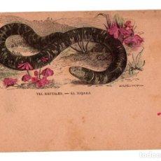 Postales: POSTAL POST CARD REPTILES EL IBIJARA TATACOA VÍBORA CIEGA...REPTILE REPTILIAN REPTILIEN DOCTOR BREHM. Lote 196295883