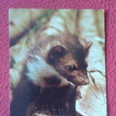 Postales: POSTAL POST CARD MARTA MARDER MARTRE MARTORA MARTEN, CARTE POSTALE, FOTO: FRANZ SCHMID....VER FOTOS.. Lote 196970506
