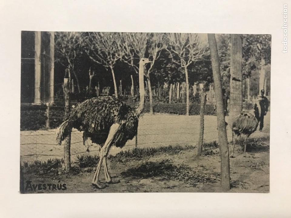 Postales: Lote 9 postales antiguas animales Zoo Catalunya - Foto 3 - 198899671