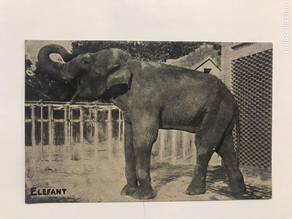Postales: Lote 9 postales antiguas animales Zoo Catalunya - Foto 8 - 198899671