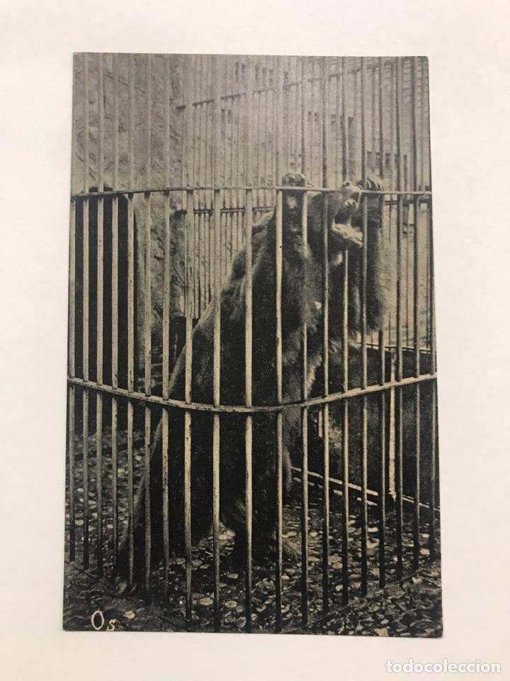 Postales: Lote 9 postales antiguas animales Zoo Catalunya - Foto 11 - 198899671