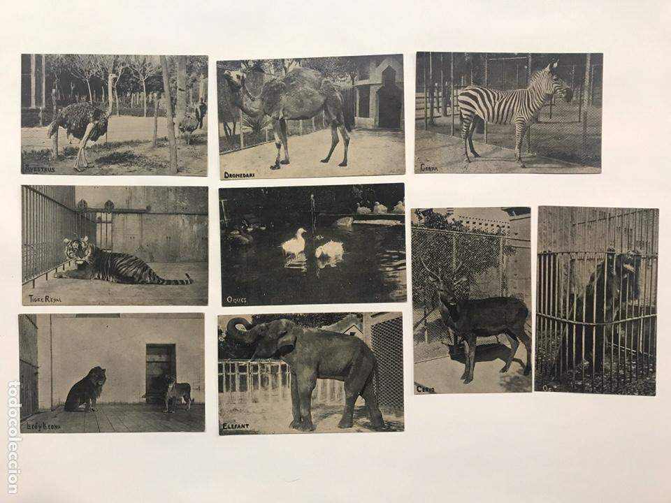 LOTE 9 POSTALES ANTIGUAS ANIMALES ZOO CATALUNYA (Postales - Postales Temáticas - Animales)