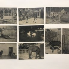 Postales: LOTE 9 POSTALES ANTIGUAS ANIMALES ZOO CATALUNYA. Lote 198899671