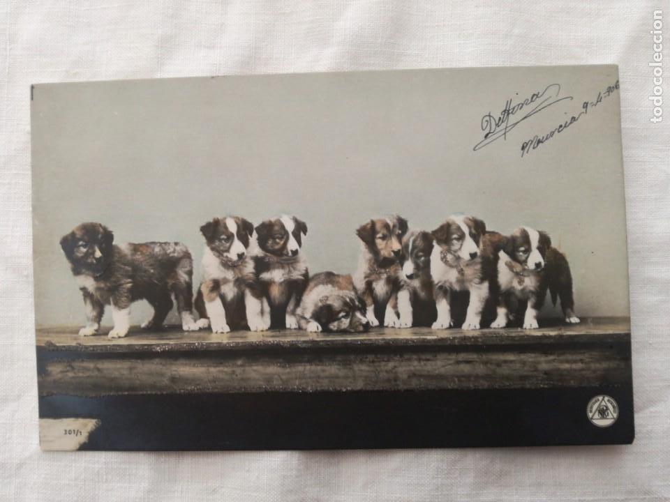 POSTAL ANTIGUA DE 1906 CON UN GRUPO DE PERRITOS. (Postales - Postales Temáticas - Animales)