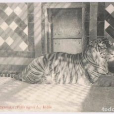 Postales: POSTAL TIGRE DE BENGALA INDIA. Lote 200628735