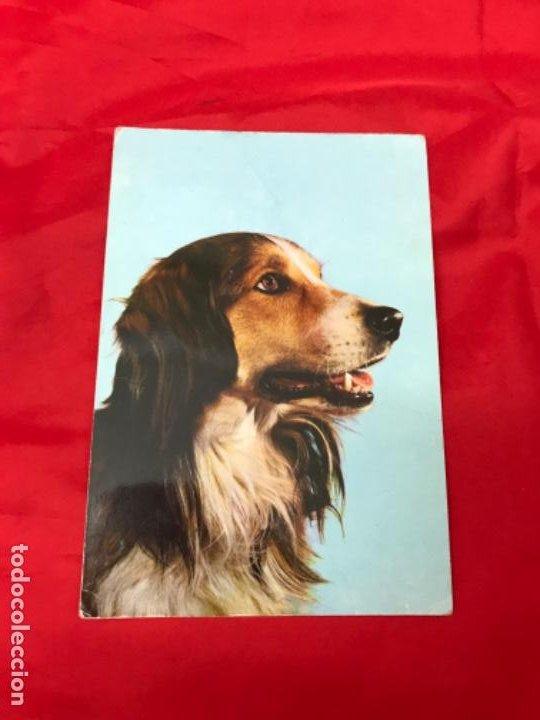 Postales: Lote cuatro postales perros cachorros pastor aleman cocker años 90 sin uso - Foto 2 - 201719108