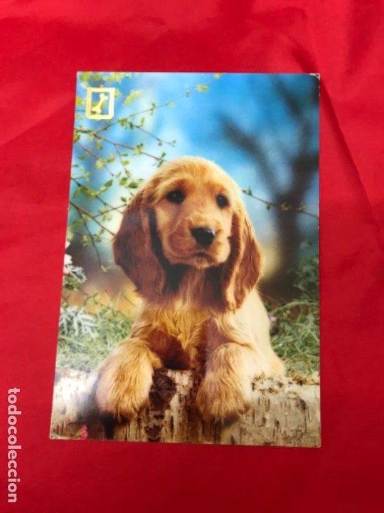 Postales: Lote cuatro postales perros cachorros pastor aleman cocker años 90 sin uso - Foto 4 - 201719108