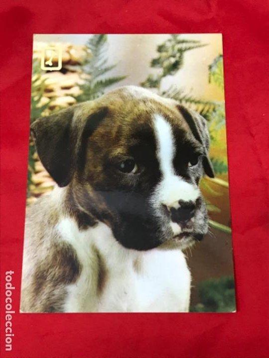 Postales: Lote cuatro postales perros cachorros pastor aleman cocker años 90 sin uso - Foto 6 - 201719108