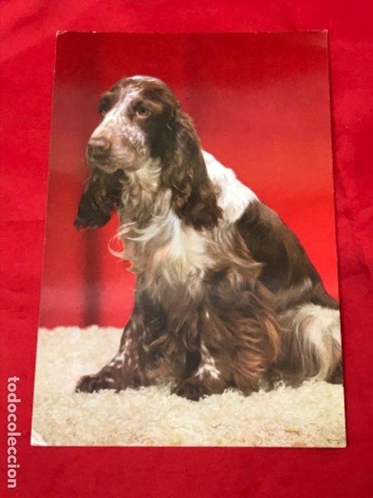 Postales: Lote cuatro postales perros cachorros pastor aleman cocker años 90 sin uso - Foto 8 - 201719108