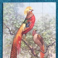 Postales: BONITA POSTAL DE 1909. Lote 202537183