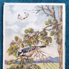 Postales: BONITA POSTAL DE 1909. Lote 202537482