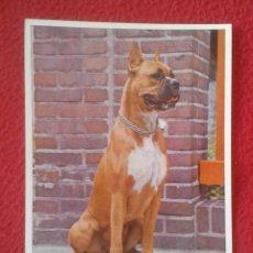 Postales: POST CARD CARTE POSTALE PRINTED IN GERMANY IMPRESA EN ALEMANIA PERRO DOG CAN HUND CHIEN KARTE VER.... Lote 203342086