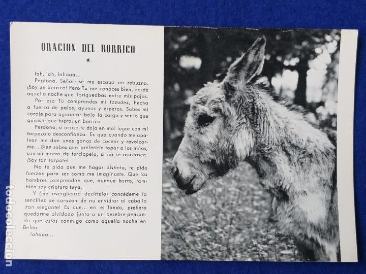 POSTAL ORACION AL BORRICO - BURRO VIOLETA FINCA AITARENTXOKO (Postales - Postales Temáticas - Animales)