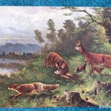 Postales: BONITA POSTAL DE 1903. Lote 204394377