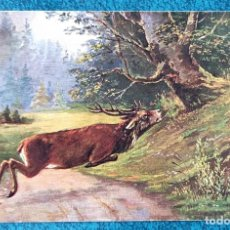 Postales: BONITA POSTAL DE 1903. Lote 204394628