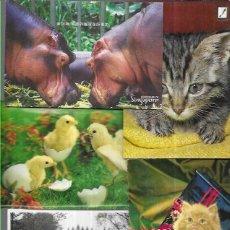 Postales: 90 POSTALES * ANIMALES *. Lote 205688735