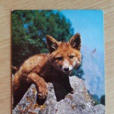 Postales: TARJETA POSTAL - ZORRO - FOX. Lote 205887443