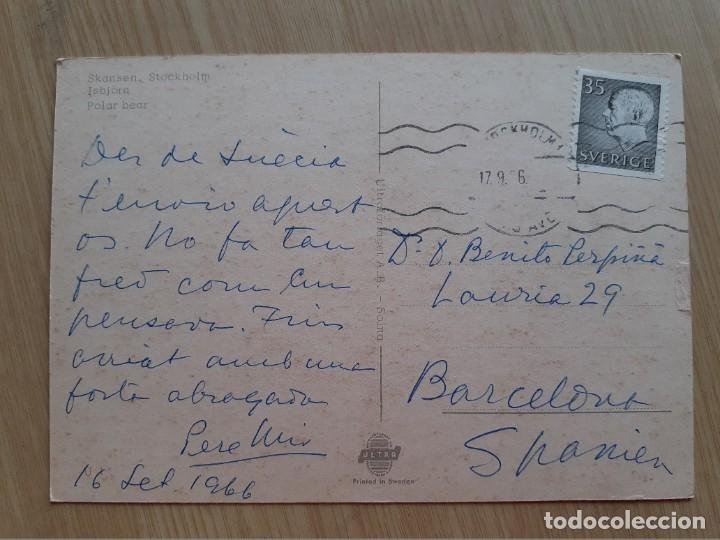 Postales: TARJETA POSTAL - SKANSEN ESTOCOLMO OSO BLANCO OSO POLAR - Foto 2 - 206322935