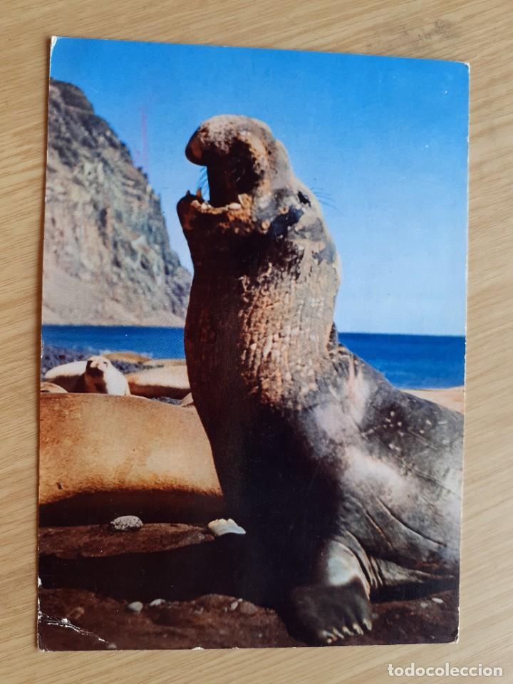 TARJETA POSTAL - CALIFORNIA SEA LION - PUBLICIDAD DE MEDICAMENTOS (Postales - Postales Temáticas - Animales)