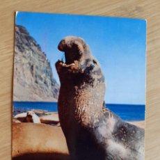 Postales: TARJETA POSTAL - CALIFORNIA SEA LION - PUBLICIDAD DE MEDICAMENTOS. Lote 206323457
