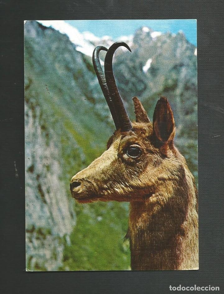 POSTAL SIN CIRCULAR - REBECO - TROFEO ABADIAS (Postales - Postales Temáticas - Animales)