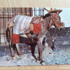 Postales: TARJETA POSTAL - TIPICO BURRO ANDALUZ 208. Lote 206449108