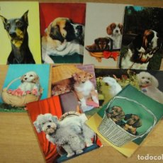 Postales: PERROS , LOTE DE 10 POSTALES -. Lote 206570213