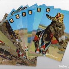 Postales: SERIE ANIMALES DOMESTICOS · LOTE DE 13 POSTALES · EL BURRITO PLAYERO -ESCUDO DE ORO-. Lote 206581796