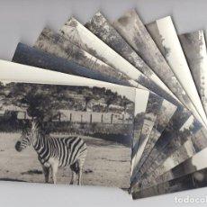 Postales: LOTE DE 10 FOTOGRAFÍAS B/N · PARQUE O RESERVA DE ANIMALES SALVAJES. Lote 206858595