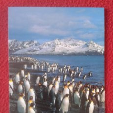 Postales: POST CARD ANTARTICA ANTARCTIC CONTINENT CONTINENTE ANTÁRTICO ANTÁRTIDA PINGÜINOS PINGOUINS PENGUINS. Lote 207070893