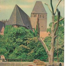 Postales: POSTAL A COLOR OSOS BERLIN. Lote 207105881