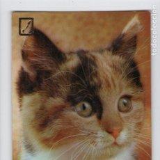 Postales: CABEZA DE GATO. Nº SERIE 3113/2 -ESCUDO DE ORO-. Lote 209006211