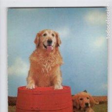 Postales: GOLDEN RETRIEVER -LAMINOGRAF-. Lote 209007828