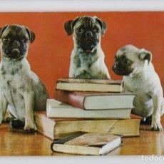 Postales: TRÍO DE CARLINO. ANIMALES DOMÉSTICOS Nº 15 SERIE 3ª -ESCUDO DE ORO-. Lote 209008291