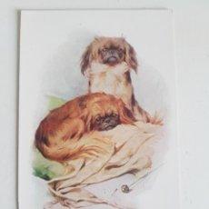 Postales: POSTAL PET DOGS LONDON. Lote 209056566