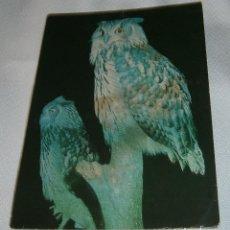 Postales: POSTAL INGLESA BUHO DEL ROYAL WINDSOR SAFARI PARK. Lote 209973587