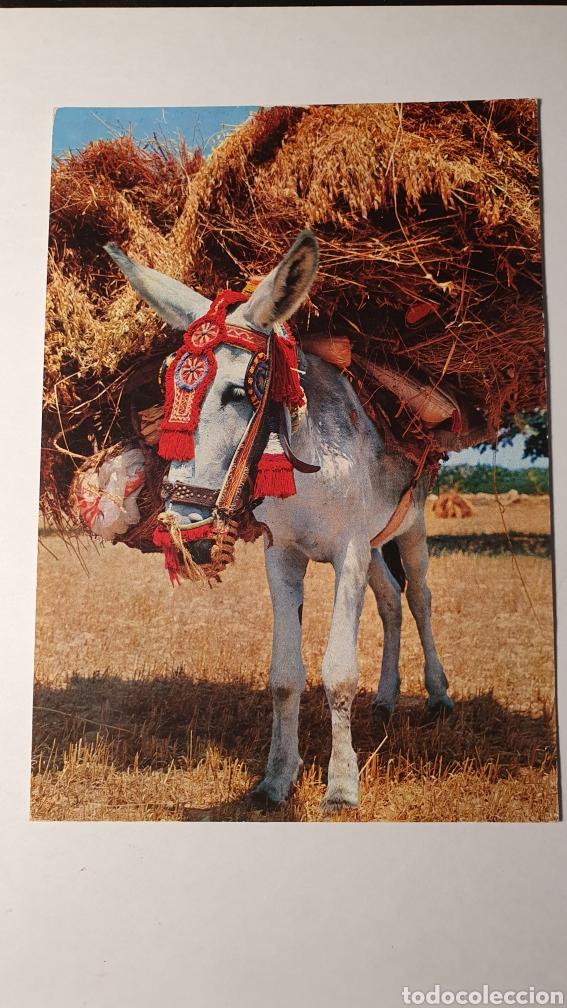 ESPAÑA TIPICA/ / POSTAL VINTAGE/ SIN CIRCULAR /( REF.B.11) (Postales - Postales Temáticas - Animales)