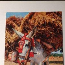 Postales: ESPAÑA TIPICA/ / POSTAL VINTAGE/ SIN CIRCULAR /( REF.B.11). Lote 210455638