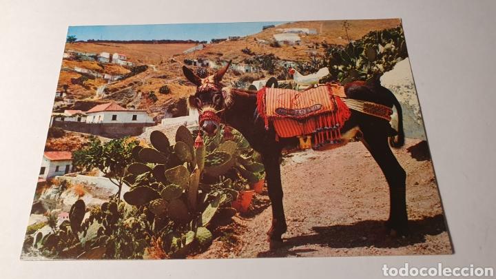 EL BURRO / POSTAL VINTAGE/ SIN CIRCULAR /( REF.B.11) (Postales - Postales Temáticas - Animales)