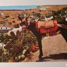 Postales: EL BURRO / POSTAL VINTAGE/ SIN CIRCULAR /( REF.B.11). Lote 210455772