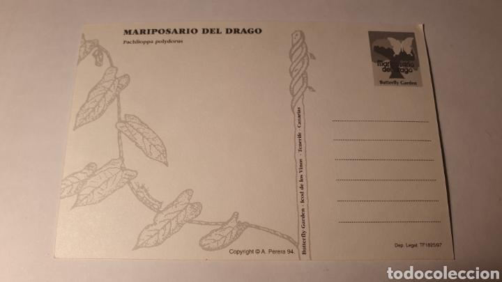 Postales: MARIPOSARIO DEL DRAGO/ SIN CIRCULAR/ (REF.B.16) - Foto 2 - 210464853