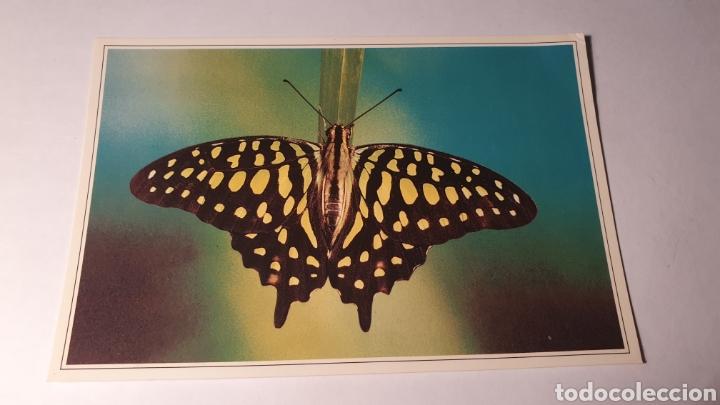 MARIPOSARIO DEL DRAGO/ SIN CIRCULAR/ (REF.B.16) (Postales - Postales Temáticas - Animales)