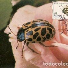 Postales: PORTUGAL & MAXI, INSECTOS DE LAS AZORES, POLYSPILA POLYSPILA, GERMAR, LISBOA 1985 (35). Lote 211435991
