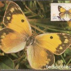 Postales: PORTUGAL & MAXI, INSECTOS DE LAS AZORES, COLIAS CROCEUS, LISBOA 1985 (37). Lote 211436386