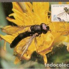 Postales: PORTUGAL & MAXI, INSECTOS DE LAS AZORES, SPHAEROPHORIA NIGRA, LISBOA 1985 (36). Lote 211436491