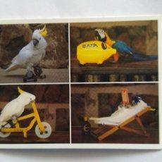 Postales: POSTAL DE SHOW DE LOROS EN PALMITOS PARK. GRAN CANARIA. PRINCIPIOS DE LOS 80. FOTO: CÉSAR HONAINE. Lote 211521319